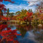 Aprende Japonés: El Videocurso Para Hablar Con Fluidez