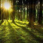 Auditor Interno ISO 14001 Gestión Ambiental
